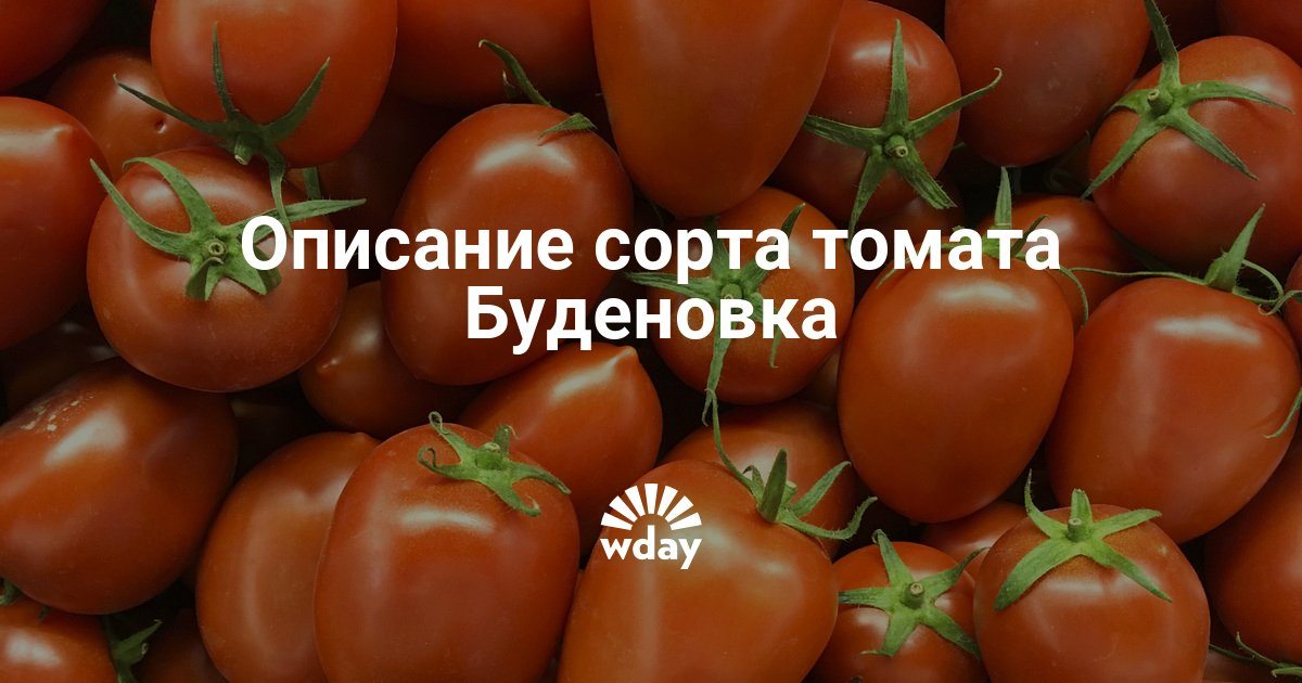 Томат будёновка: характеристика и описание сорта, отзывы, фото, урожайность