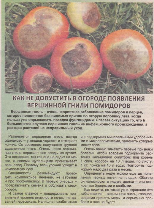 Серая гниль томатов в теплице – фото и их лечение, препараты, народные средства, профилактика
