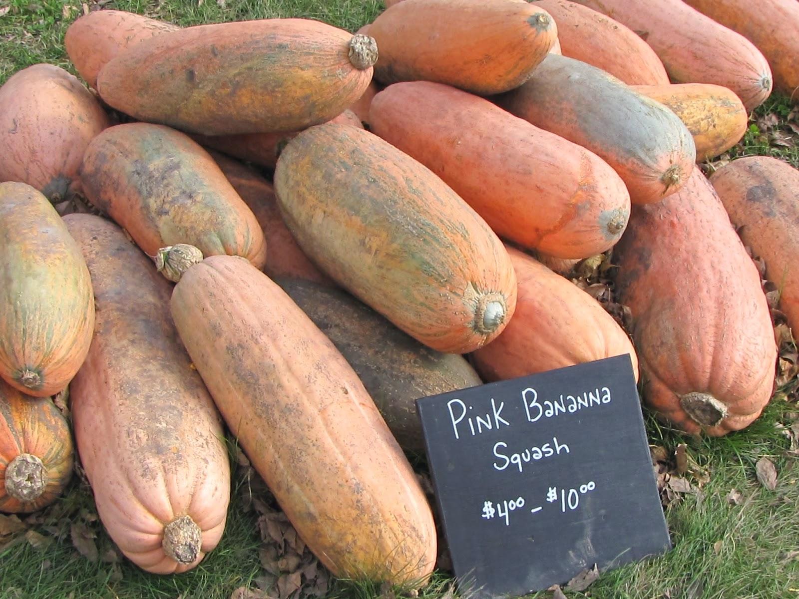 Экзотический овощ с необычным вкусом и названием — тыква «розовый банан»: описание сорта