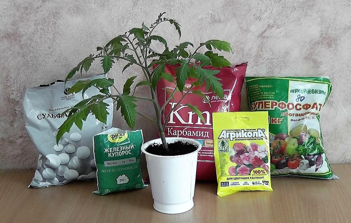 Подкормка рассады помидоров древесной золой и правила применения удобрения