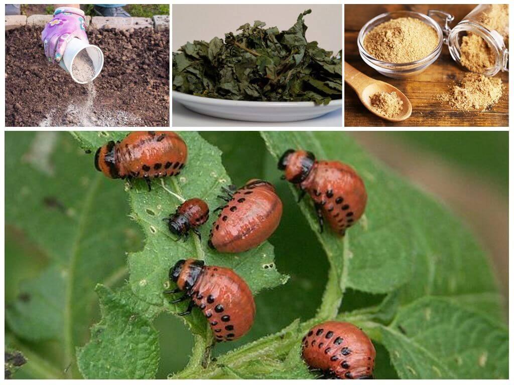 22 растения, которые помогут защитить сад от вредителей