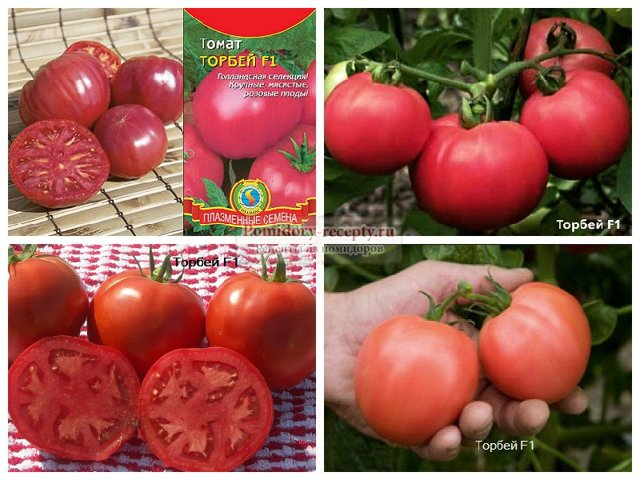 Описание сорта томата белфорт, особенности выращивания и ухода