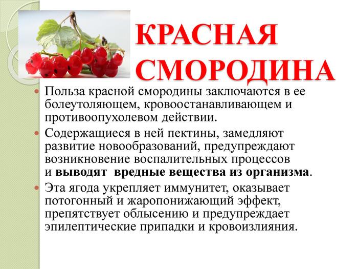 Красная смородина: польза и вред для здоровья человека, применение противопоказания