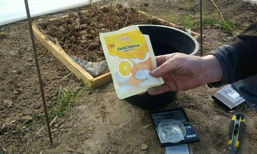 Как подкислить почву - 4 лучших способа