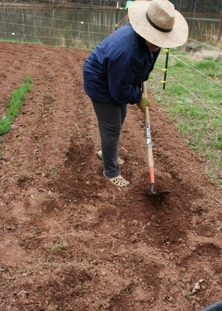 Копать или не копать огород? нужна ли осенняя перекопка?