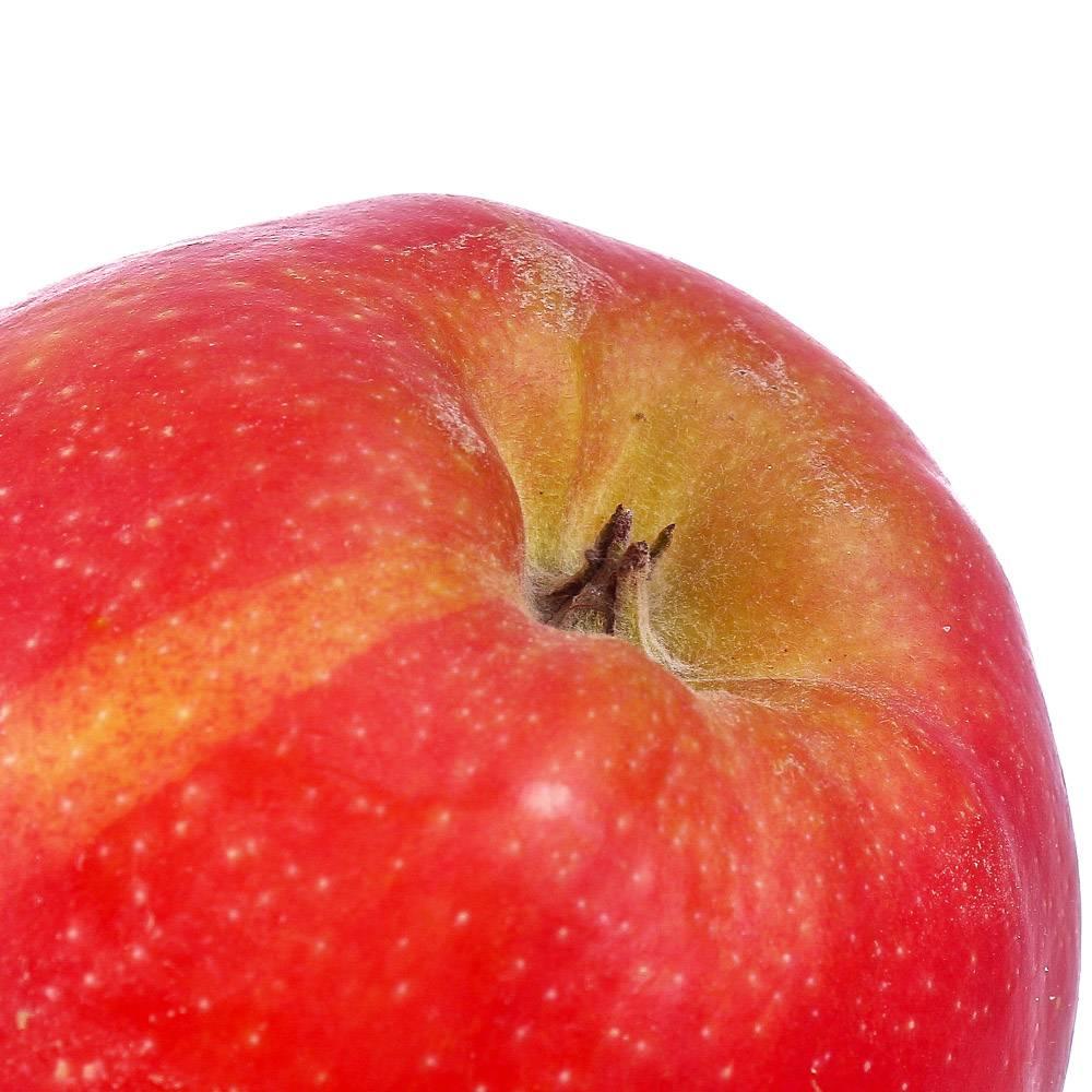 Яблоня гала: характеристика сорта, разновидности, посадка, отзывы