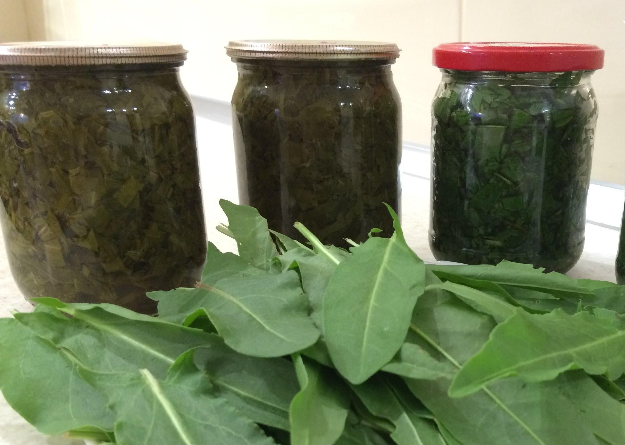 Щавель на зиму - 7 лучших рецептов заготовок в домашних условиях