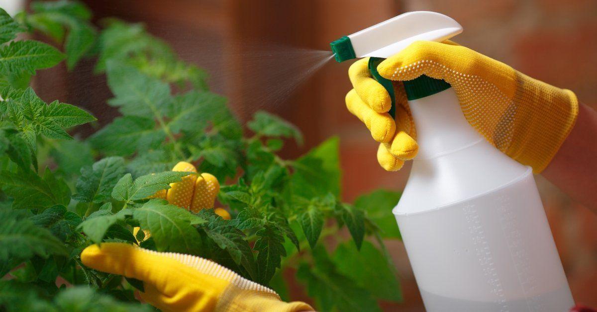 Характеристика ядохимикатов и препаратов для борьбы с вредителями и болезнями растений