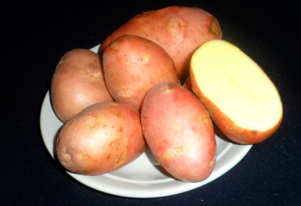 Сорт картофеля джелли: характеристика