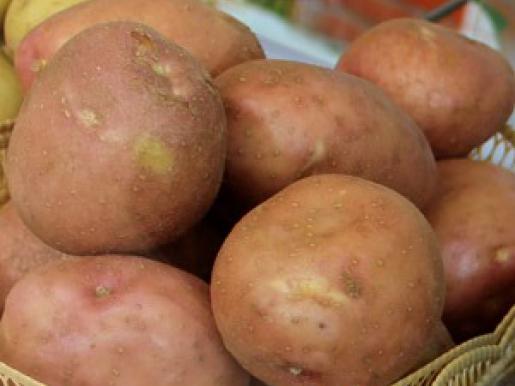 ᐉ сорт картофеля «ирбитский» – описание и фото - roza-zanoza.ru