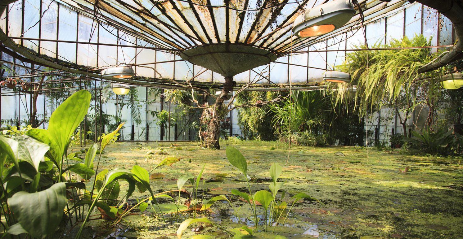 Ботанический сад в самаре