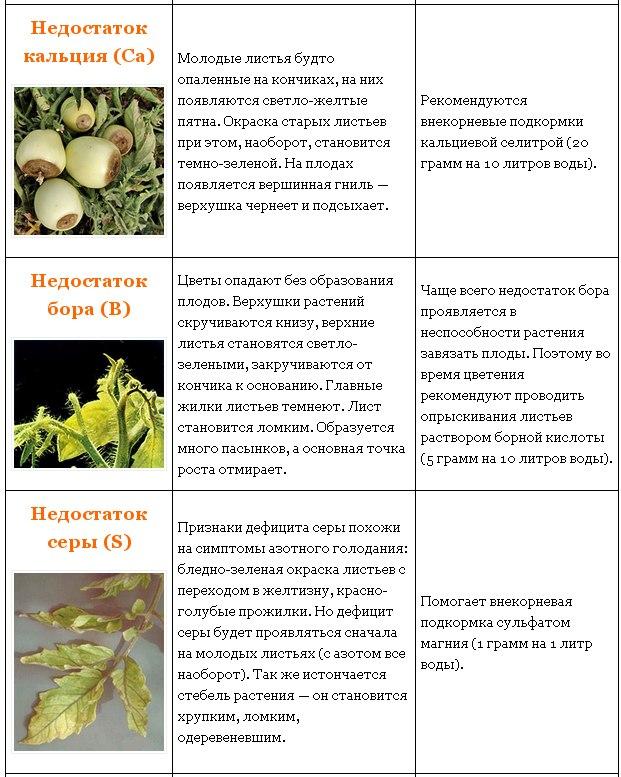 Вредители и болезни косточковых деревьев: фото, лечение заболеваний и защита от насекомых