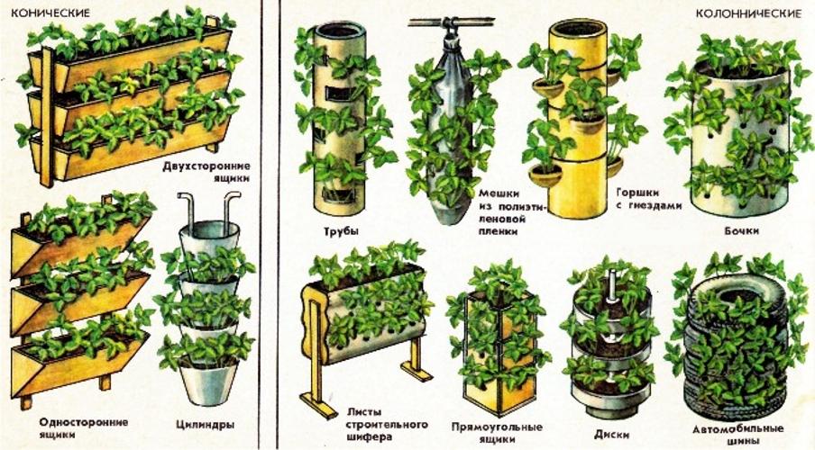 Выращивание клубники дома на подоконнике круглый год: инструкция для начинающих