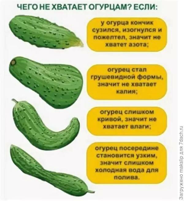 Подкормка огурцов в теплице: какие удобрения и когда использовать, чтобы были толстенькие
