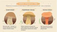 Царский (яичный и цезарский) гриб: описание и фото, характерные особенности