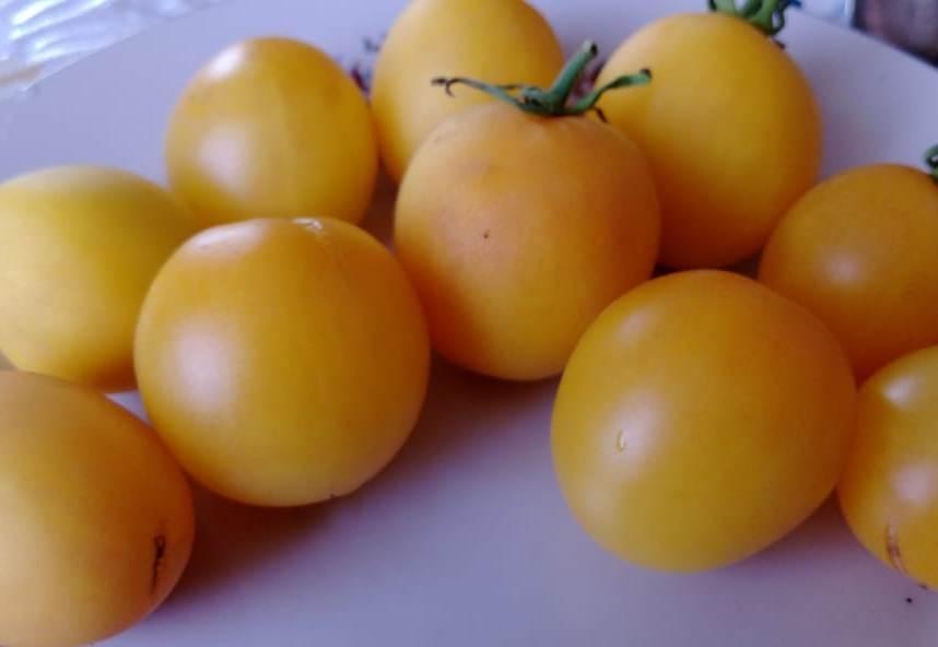 Популярные сорта желтых томатов