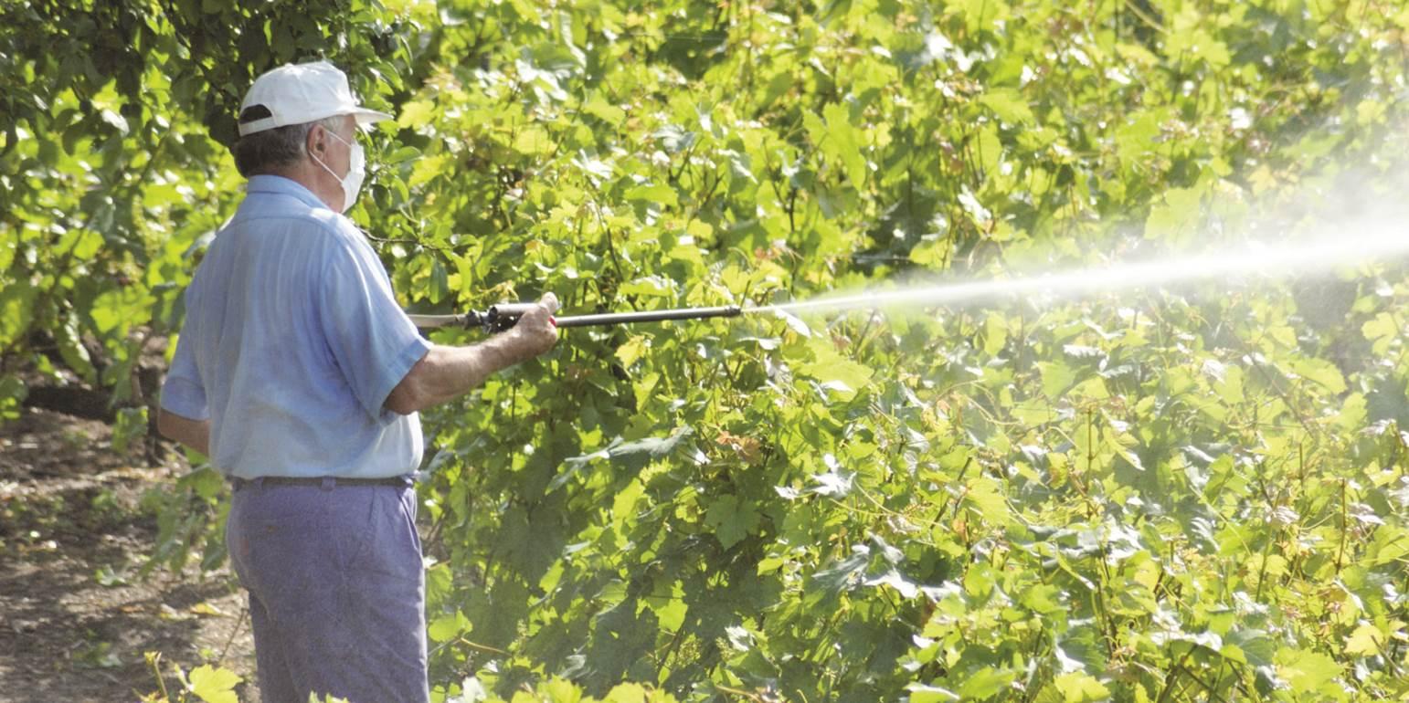 Чем обработать виноград весной после открытия: народные средства и химические препараты