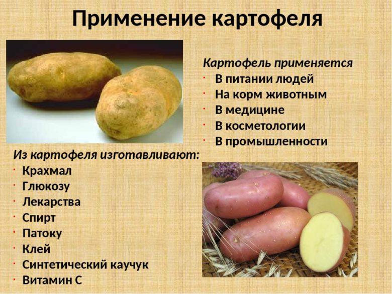 Польза и вред картофеля для здоровья человека