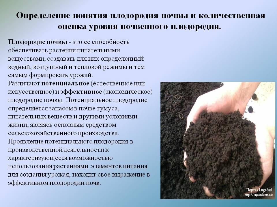 Повышение плодородия почвы: как ее улучшить своими руками и сделать чернозем? мероприятия, направленные на повышение плодородия почвы на садовом участке