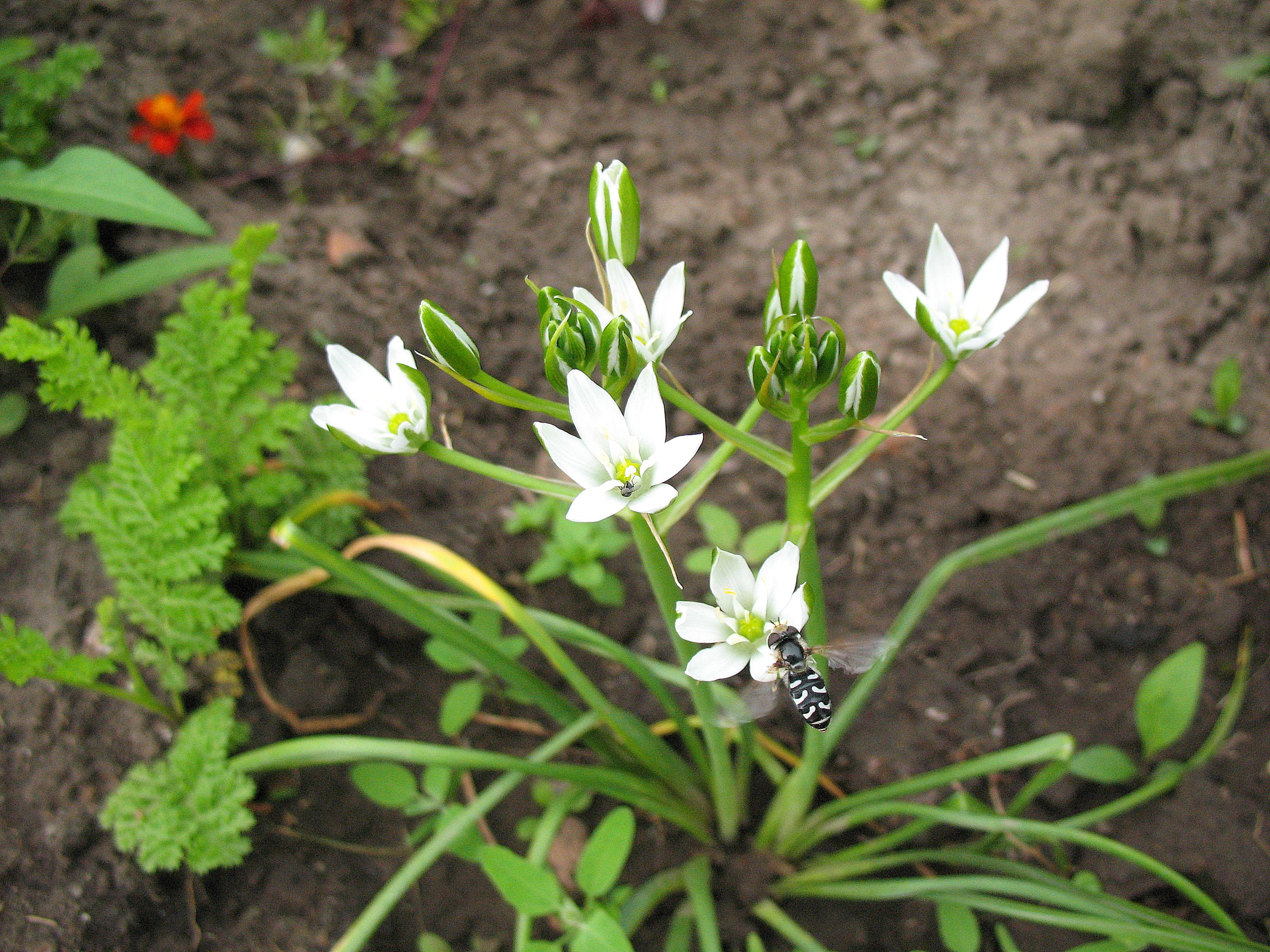 Дрок: фото и описание растения, посадка и уход, полезные свойства