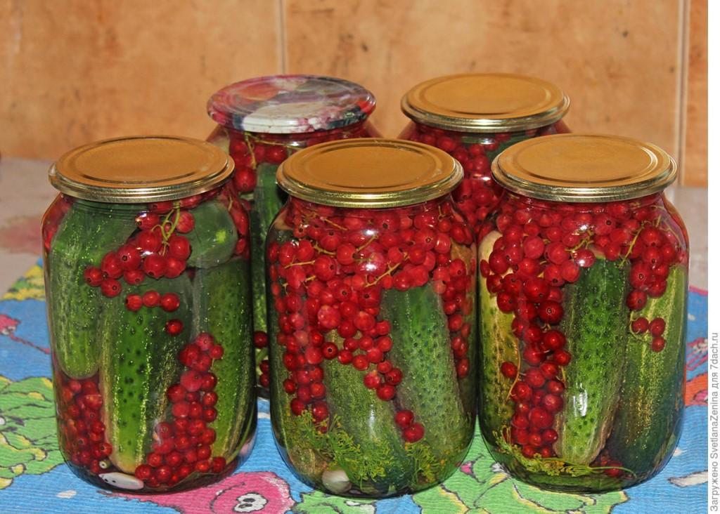 Огурцы, консервированные с красной смородиной на зиму без уксуса и стерилизации, преимущества и рецепты