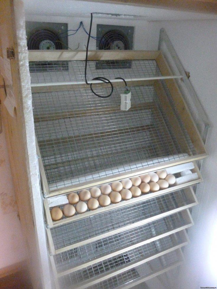 Сделаем инкубатор из старого холодильника