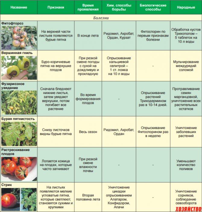 Болгарский перец: выращивание в теплице. посадка и уход за сладким перцем в теплице
