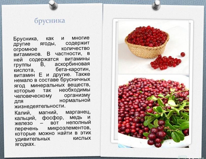 Полезные свойства и противопоказания ягод брусники, употребление в лечебных целях