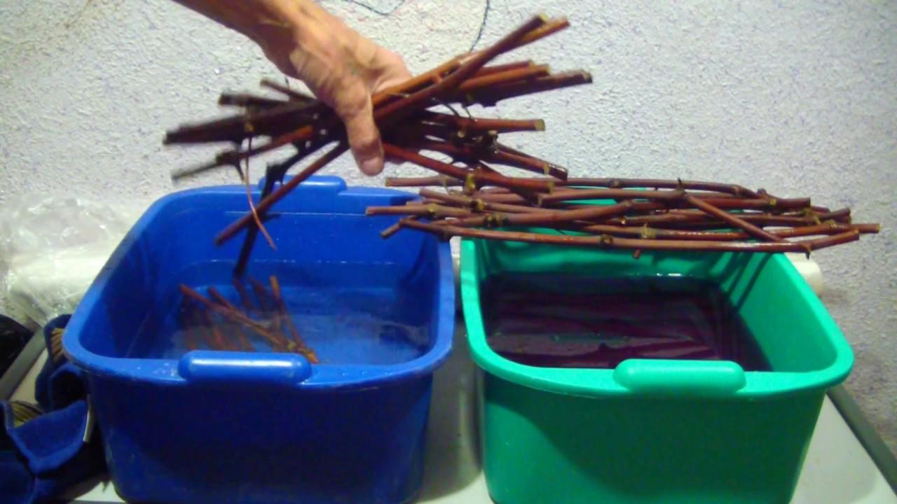 Как хранить зимой виноградные чубуки. как сохранить черенки винограда зимой до весны | дачная жизнь