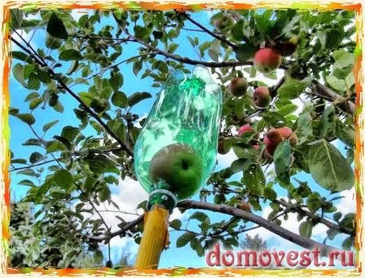 Приспособление для снятия яблок с дерева: 2 варианта плодосъемников своими руками
