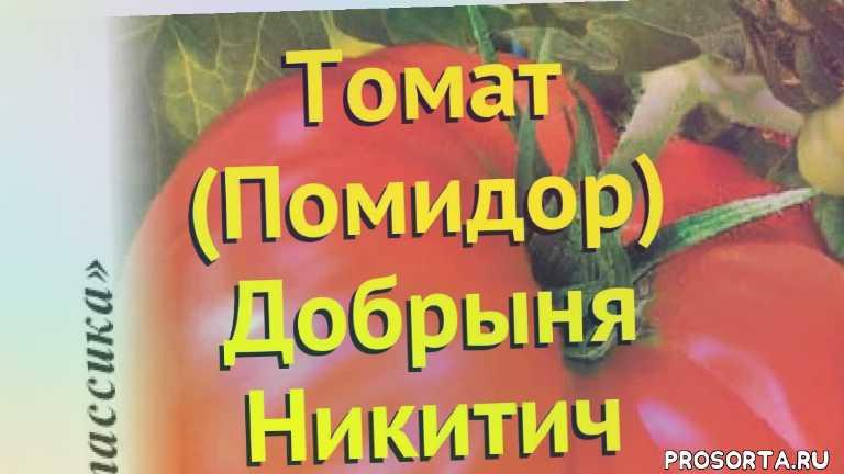 Томат добрыня никитич: характеристика и описание сорта с фото
