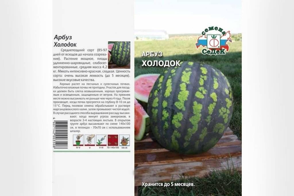 Арбуз продюсер: описание и характеристики сорта, посадка и уход, выращивание, отзывы
