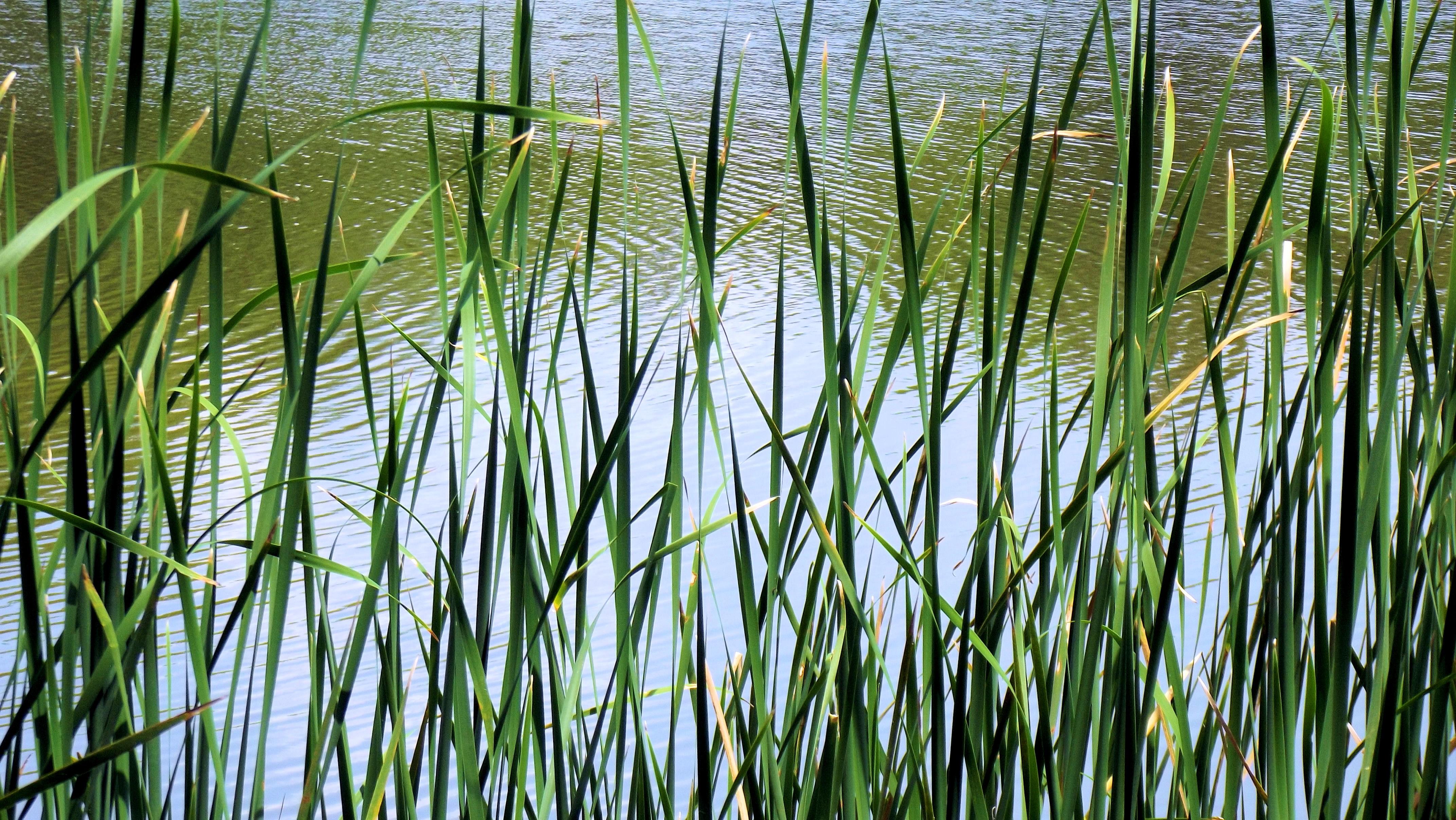 Водная и прибрежная растительность