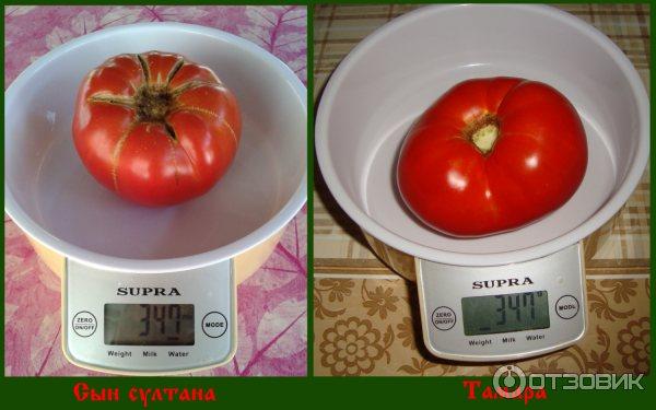 Семена томатов от валентины редько