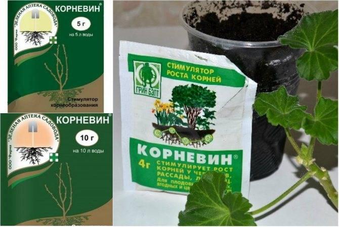 Как использовать корневин: инструкция по применению для рассады и комнатных растений, состав, отзывы