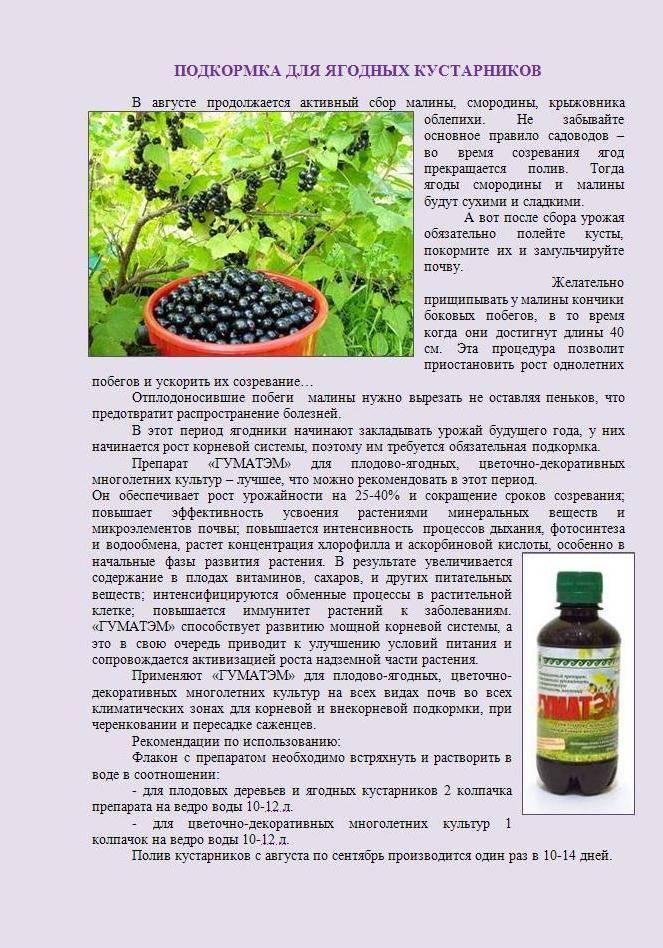 Борная кислота: применение на огороде и в саду. опрыскивание и подкормка растений борной кислотой