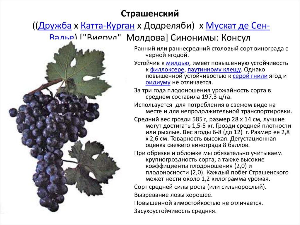 Гибридные формы (сорта) винограда народных селекционеров-любителей