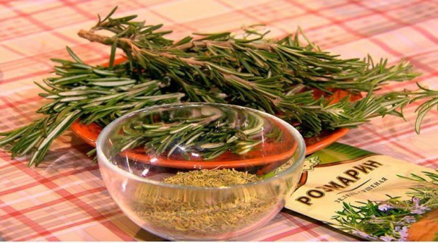 Розмарин: лечебные свойства и противопоказания для здоровья, польза и вред
