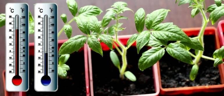 Томат температура грунта, фото / почва и земля для рассады помидоров, видео