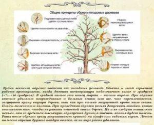 Техники и схемы обрезки грецкого ореха