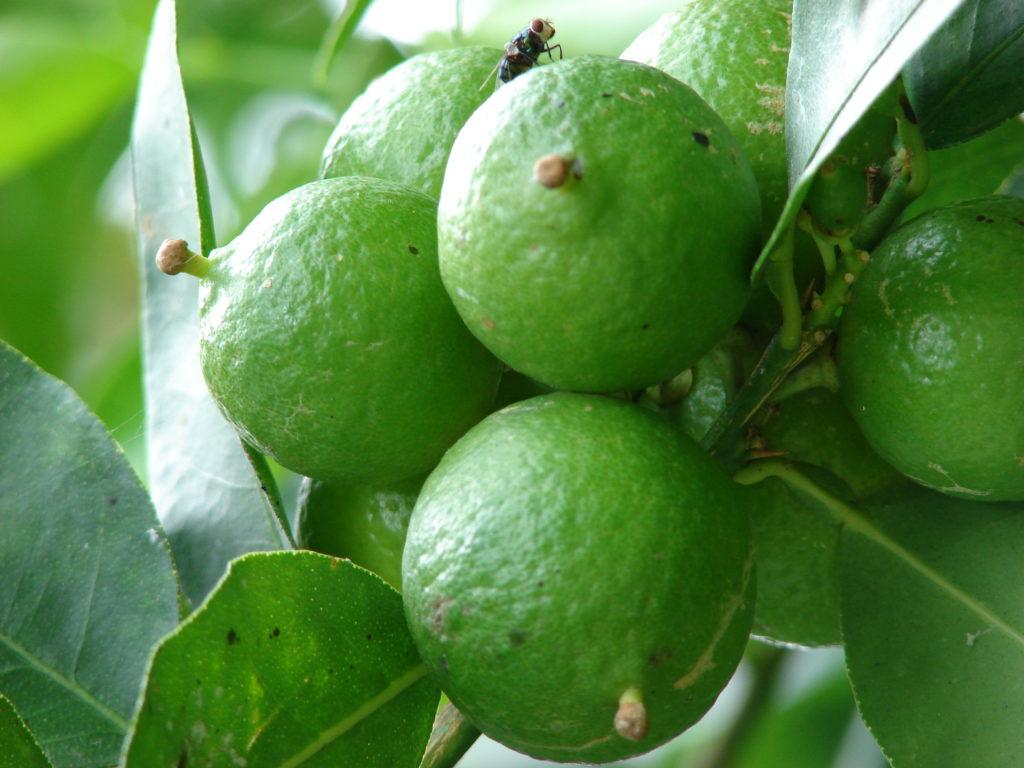 ✅ посадка и уход за колоновидными плодовыми деревьями - сад62.рф