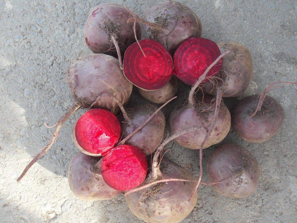 Свекла пабло f1: особенности сорта, урожайность, отзывы
