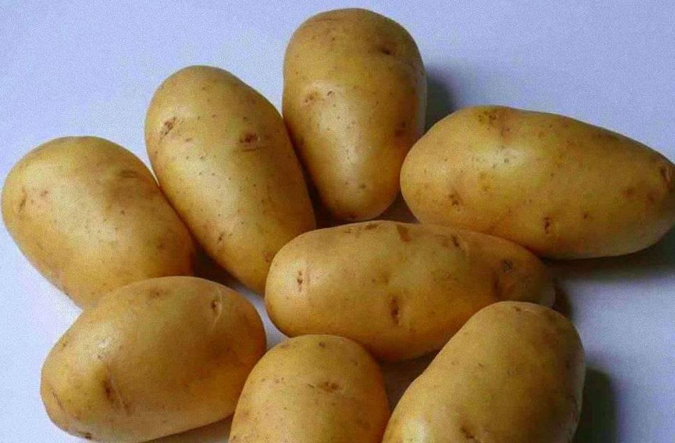 Картофель лорх: описание сорта с фото и отзывами