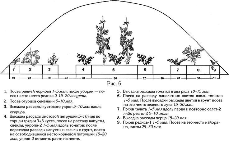 На каком расстоянии следует сажать помидоры: выбор схемы посадки томатов