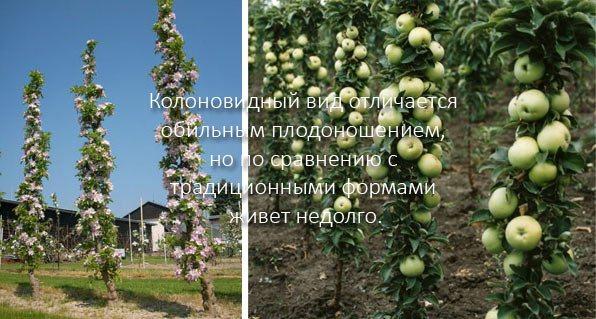 Почему на деревьях нет плодов и что с этим делать: советы эксперта