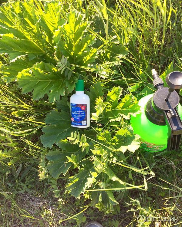 Топ-25 популярных гербицидов от сорняков: описание, применение и отзывы