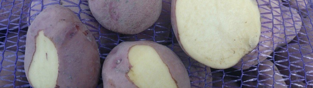 Сорт картофеля журавинка: фото, характеристика и описание вида, советы по выращиванию и рекомендации по сбору урожая, а также описание вкусовых особенностей овоща
