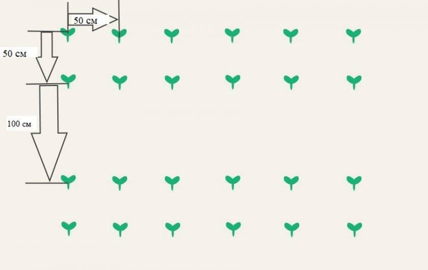 Посадка огурцов семенами в открытый грунт: как и когда сажать овощ