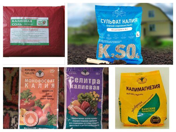 Хлористый калий и его применение в саду и огороде