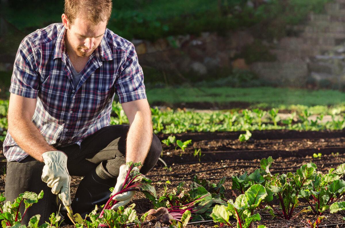 Шпинат: секреты посадки и ухода, когда и как сеять семена